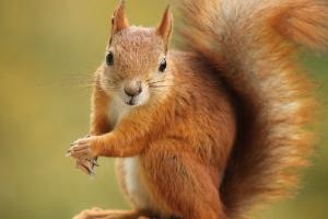 squirrel facing the camera