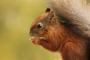 a closer view of a squirrel and its tail