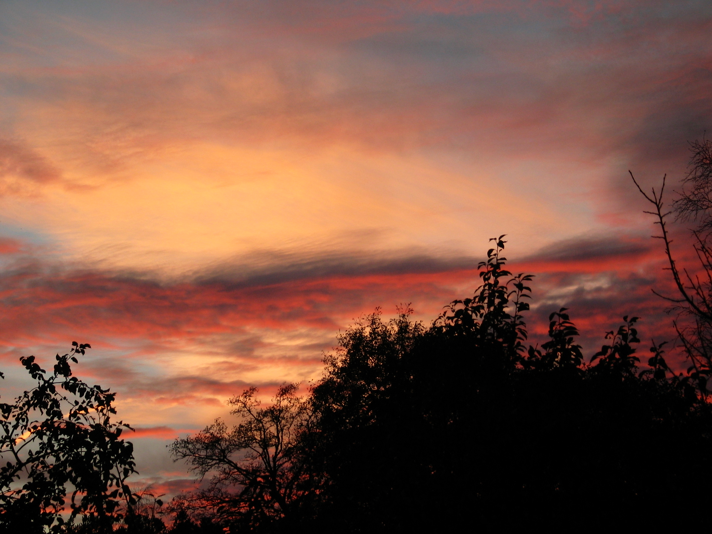 An autumn sky at sunset with treetops in the foreground