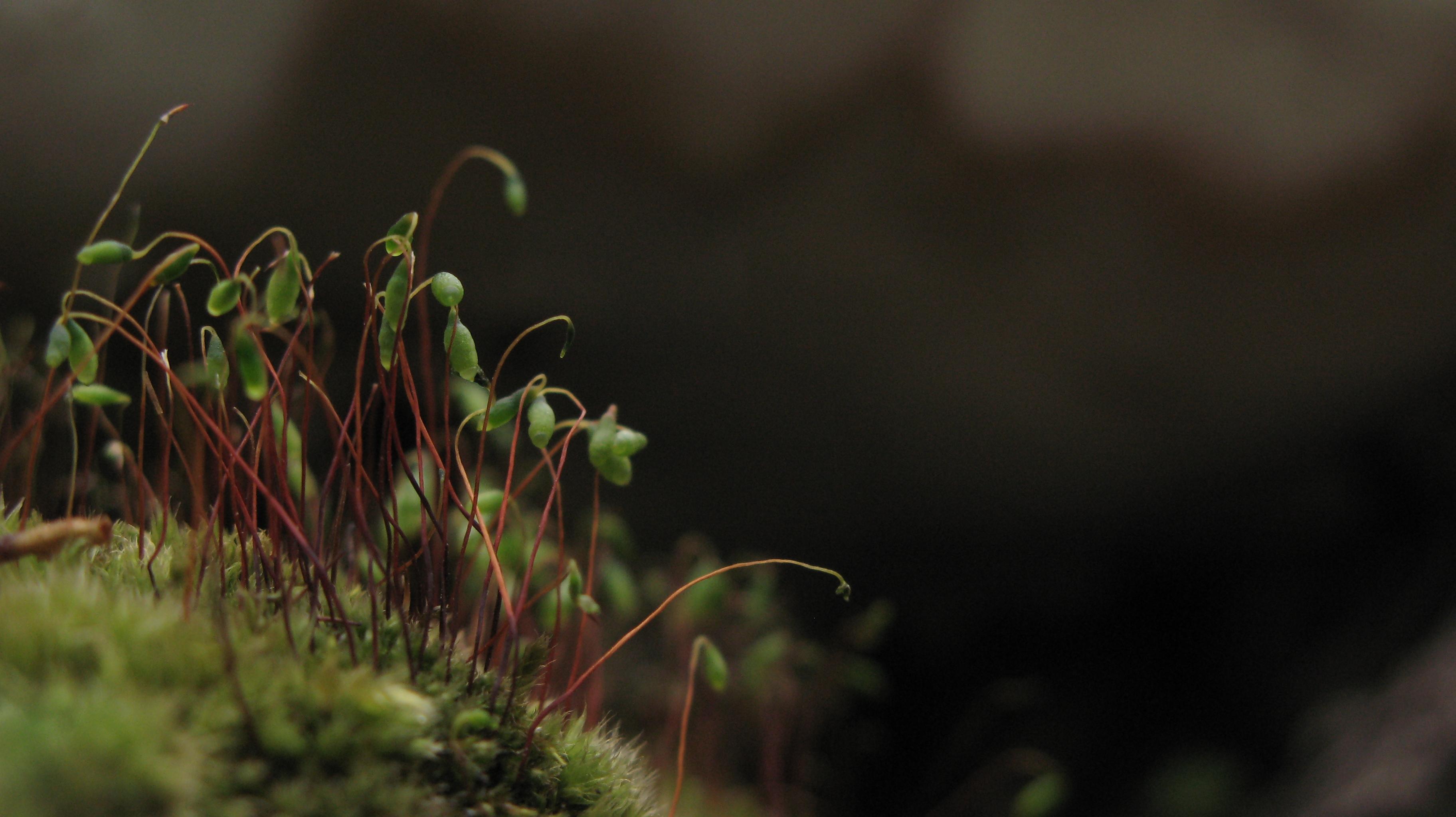 Fragile vegetation growing on moss