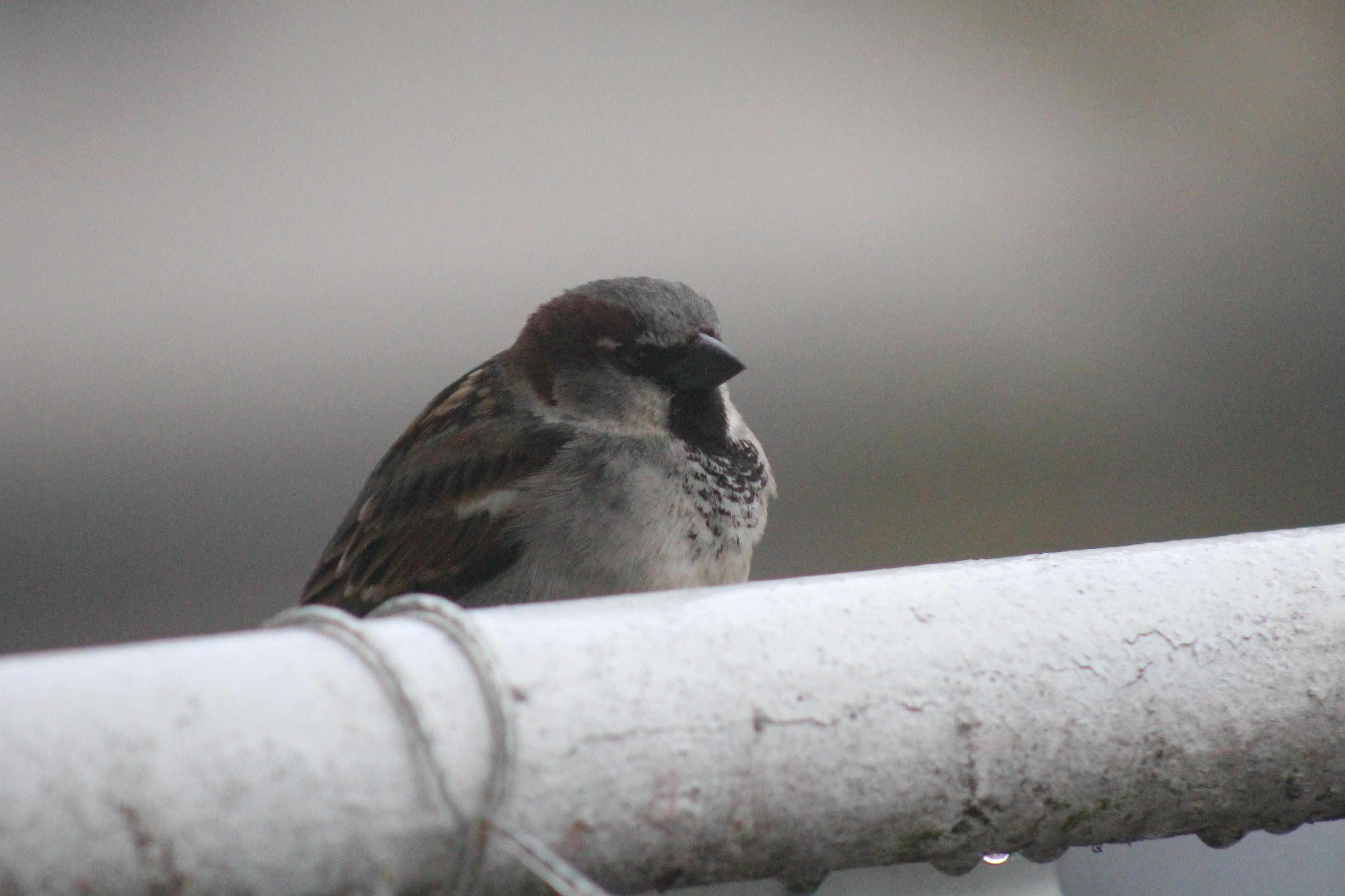 Bird sitting on a balcony railing